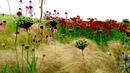 How landscape designer Piet Oudolf captures nature's 'emotion'