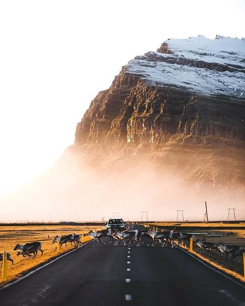Потрясающий утренний кадр, Исландия