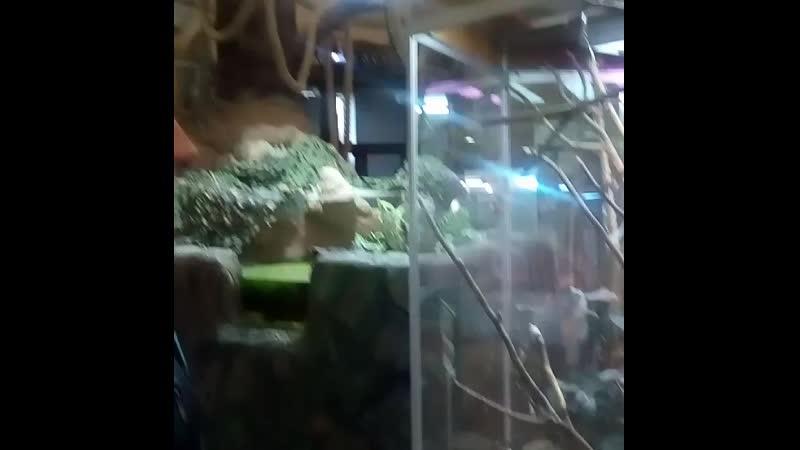 зоо 3