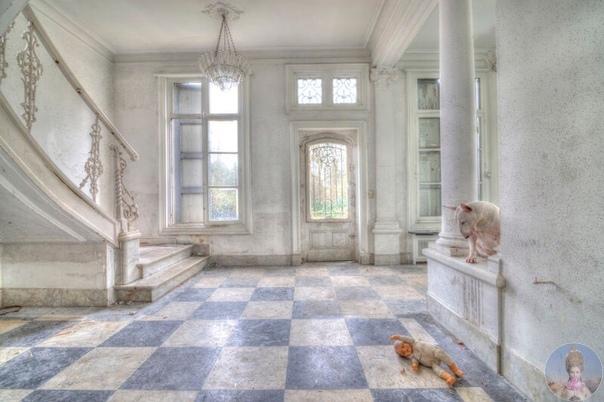 Любимая модель фотографа Элис ван Кемпен ее трехлетний бультерьер Клэр Вместе парочка исследует заброшенные места в Европе вот уже более двух