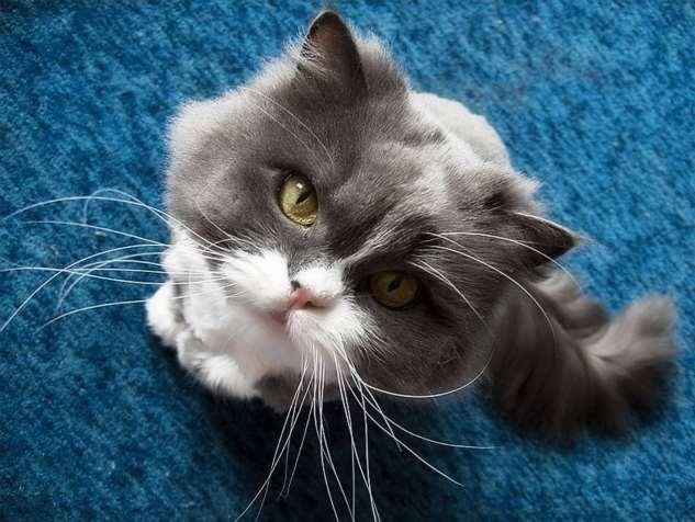 Очаровательные котики!