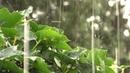 Музыка дождя. Music of the rain. 4K