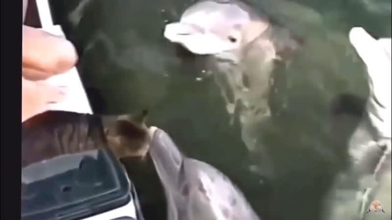 Дружба между людьми и Дельфинами?
