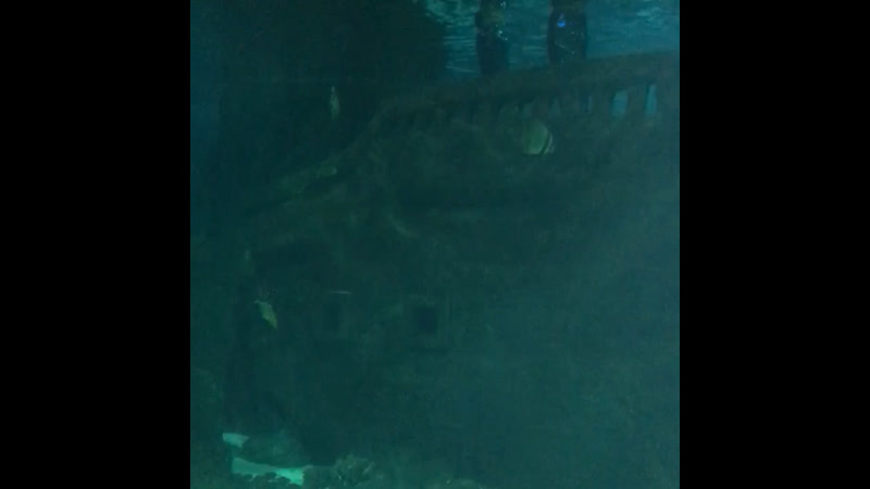 Шоу с русалками. Океанариум Адлер