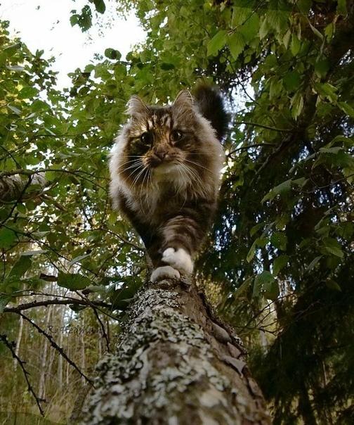 Финский кот Сэмпи и его приятели