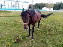Яся очень злиться, когда вы забываете угощения для лошадей 😁 #злая_лошадь #Ясенька #конный_двор_Хуто