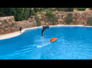 Шоу дельфинов Loro Parque