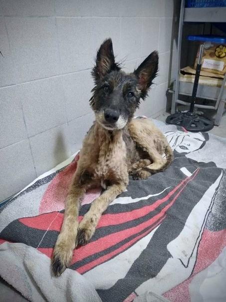 На спасение собаки потребовалось 8 добровольцев, 9 часов работы, 50 литров масла