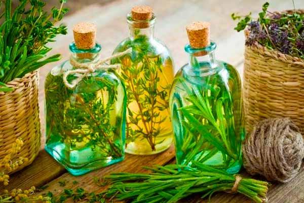 Типы лекарственных растений