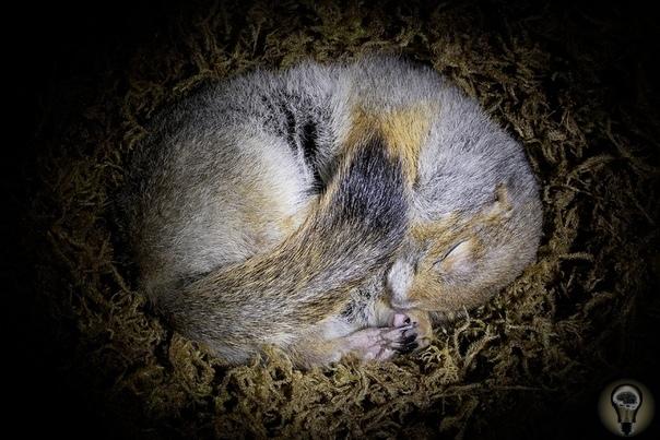 ЗИМА, ХОЛОДА: КАКИМИ СПОСОБАМИ ВЫЖИВАЮТ ОБИТАТЕЛИ ПОЛЯРНЫХ ШИРОТ С холодами шутки плохи, тем более на Крайнем Севере. И юге. Местные животные находят множество хитроумных способов переждать
