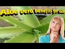 Benefits of drinking aloe vera juice for skin and hair