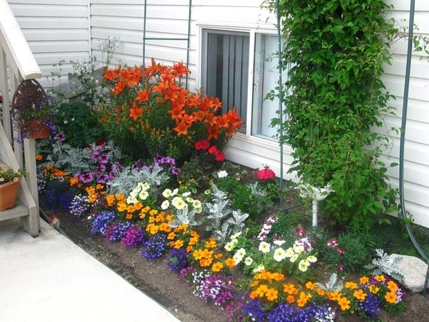 Цветник для начинающих садоводов