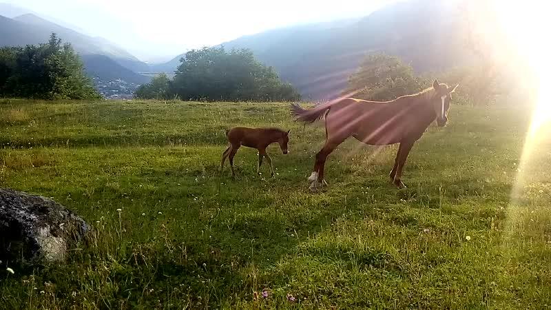 Лошадки))