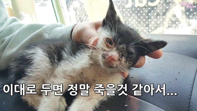 죽어가는 아기고양이에게 강제로 설탕물을 먹였습니다 kitten rescue