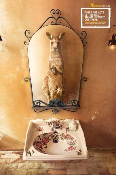 Фотопроект Animal selfies от National Geographic