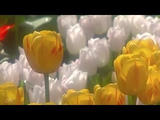 Весна пришла! Оркестр Поля Мориа - Love story - Paul Mauria. Композитор Франсис