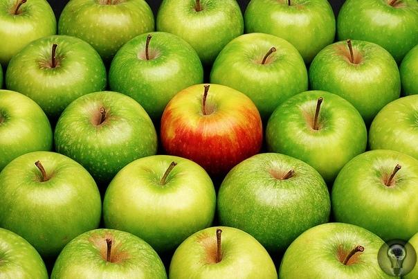ЦИФРЫ: СОЧНЫЙ ЭТАЛОН Яблоко стало не только символом начала истории человечества, но и мерой вещей. Стоило в Европе появиться новому плоду, его тут же сравнивали с яблоком. Апельсин называли