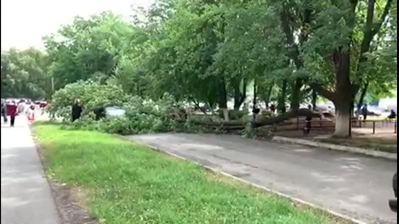 Упало дерево 🌳 прямо на автомобили возле МСЧ 20