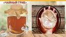 Ферментированный чайный гриб 147 руб Напиток из чайного гриба Чайный гриб для похудения
