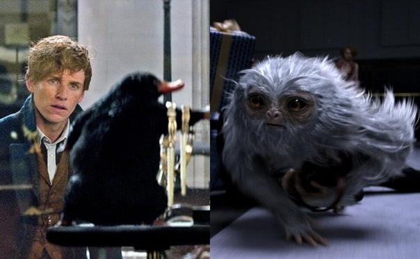 Что общего у нюхлера и утконоса ВВС снимет передачу о животных из «Фантастических тварей»