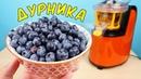 Что если выжать сок из Дурники Голубики Дурника самая крутая ягода в мире alex boyko