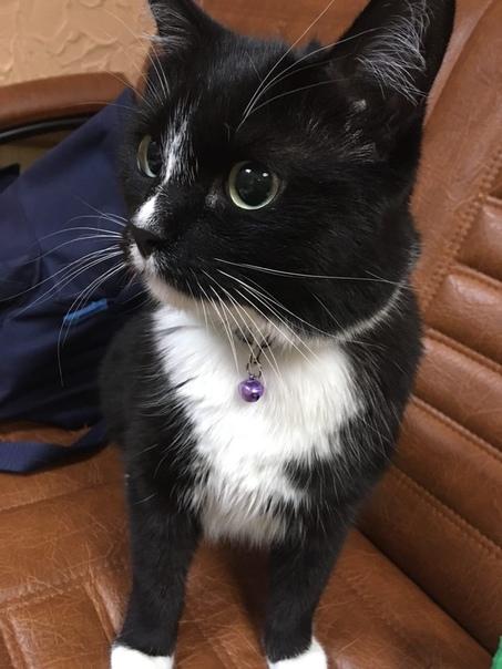 Отдам кота, зовут шмель, ему 3-4 года , к лотку приучен, кушает корм, очень ласк...