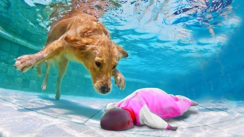 Собака Герой Спасает Жизнь Ребенку! 10 Невероятных Случаев Снятых На Камеру