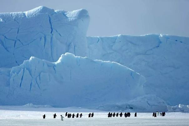 """Учёные впервые представили миру подробную """"последнюю"""" карту Антарктиды"""