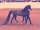 ТАНЕЦ Что делает эта лошадь Вау Лошадь $$$1000000 $$$