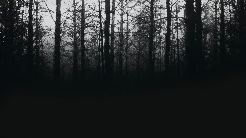 Ведьма из Блэр: Курсовая с того света / Blair Witch Project, The. 1999. 1080p Перевод MVO (Студия Велес) VHS