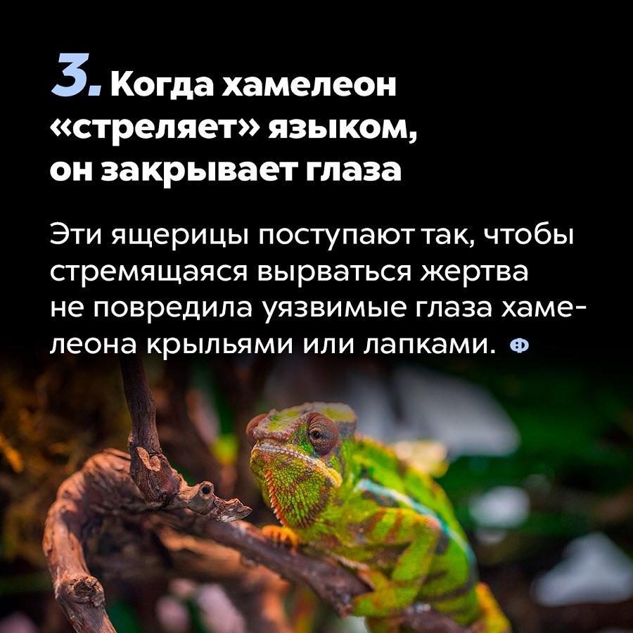 https://pp.userapi.com/c857736/v857736377/151f0/hOBnqxXzCr4.jpg