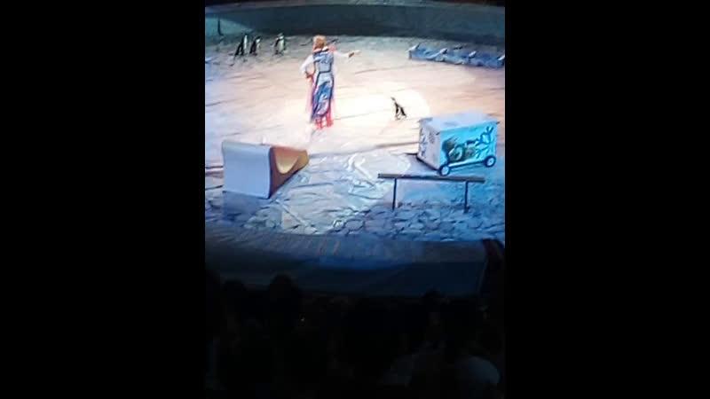 В цирке Пингвин шоу