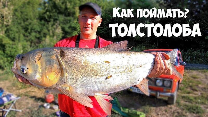 РЫБАЛКА на ТОЛСТОЛОБА с НОЧЕВКОЙ - ЛОВИМ КАРПА и КАРАСЯ на ФИДЕР