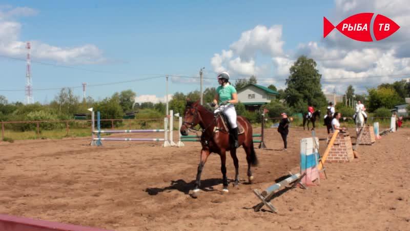 Турнир памяти коня по кличке Шанс