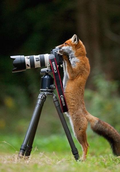 Лучший фотограф!
