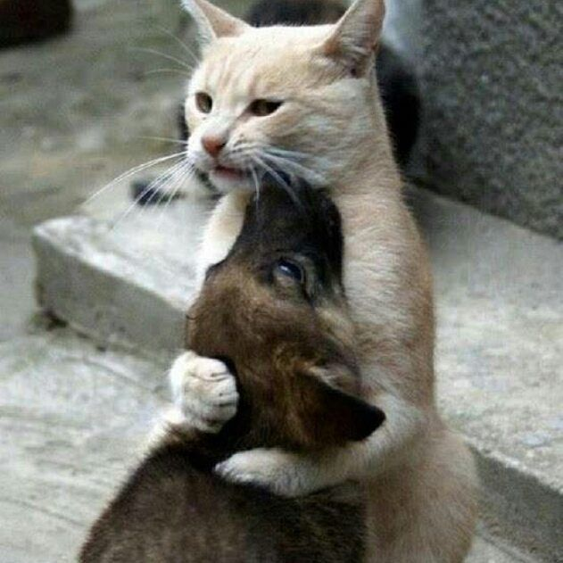 Обидели сволочи?! Да ты мой зайчик, иди я тебя пожалею!)