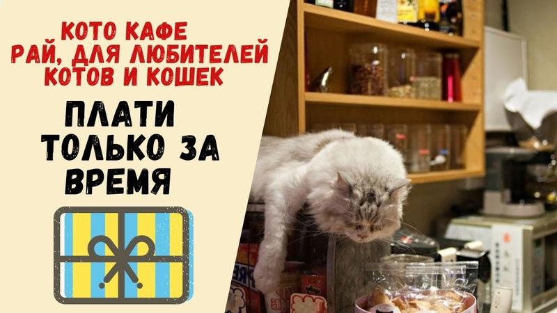 Кафе с кошками Пышки по 8 рублей Все во влоге скорей смотри