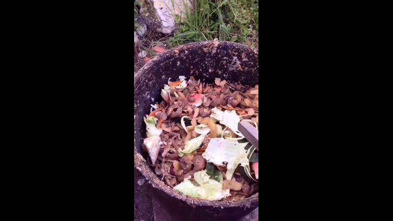 Уличная еда-2, 🐓🔥😅🤣весь процесс приготовления, 🕶👑🐔🐥по куриному вкусно😎🥰👀