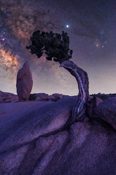 Млечный Путь и Юпитер над деревом Джошуа Дерево Джошуа (Joshua tree) или Юкка коротколистная (Yucca brevifolia) растет в природе только в одном месте на Земле - в пустыне Мохаве на юго-западе