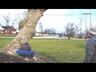 Stihl 041G Dropping Large Trunk and Bucking | пилят деревья | спил дерева