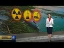 «Красноярский Чернобыль» рыба умирает, берега Енисея загрязнены, виноваты рыбаки