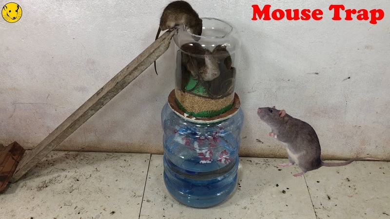 Water Bottle Mouse Trap/Best Idea Trap Easy Saving Rat/Mouse Trap Homemade/Mouse Reject
