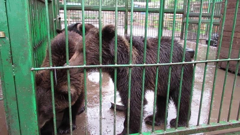 Объединили медвежат