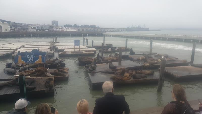 Pier 39 - San Francisco seals - :3