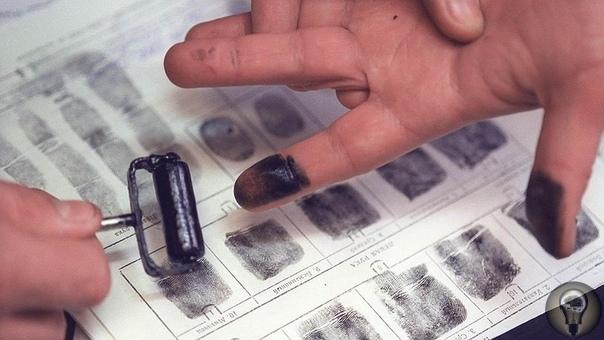 На кончиках пальцев. Дактилоскопия Дактилоскопия (с греческого смотрю на палец) широко применяется в криминалистических исследования для поиска и опознания вовлеченных в преступление лиц. Она