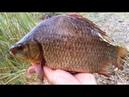 Рыбалка на крупного карася. Секреты ловли