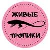 """""""ЖИВЫЕ ТРОПИКИ"""" ДЗЕРЖИНСК"""