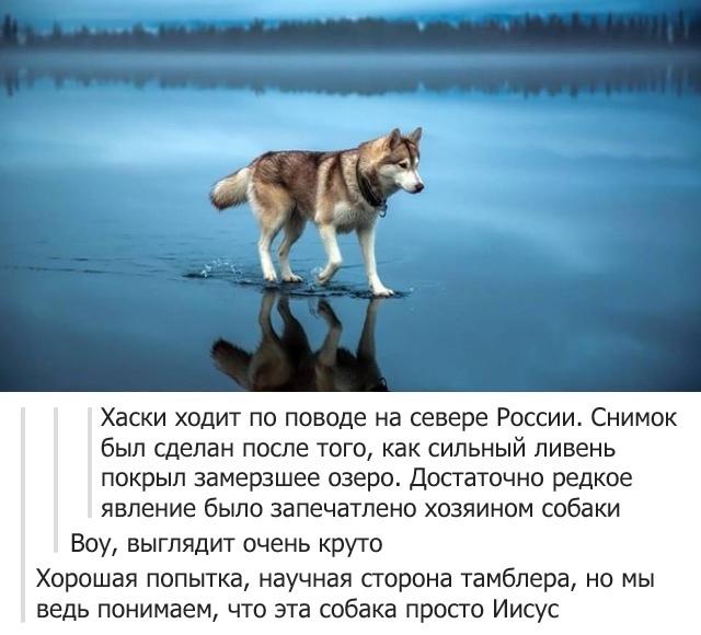 Священная собака