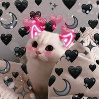 пикчи для котиков