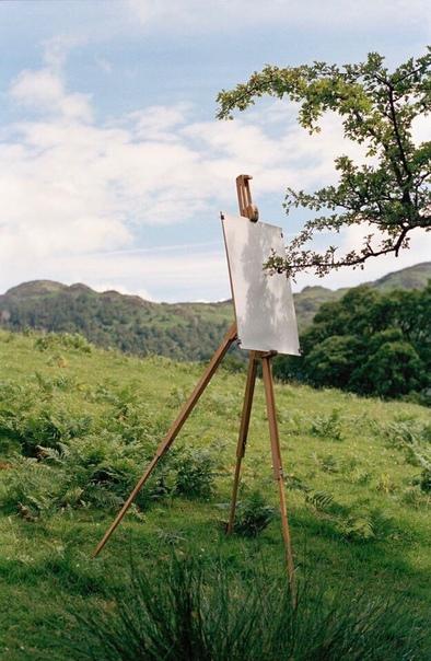 Британский художник Tim nowles дал возможность деревьям рисовать